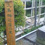 mishimabaikamo