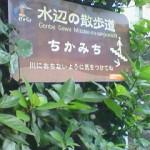 chikamichi